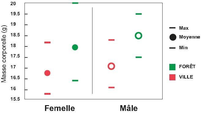 Figure 1 : Masse corporelle chez la Mésange charbonnière en habitat urbain et forestier (année 2020. Femelles [17 urbaines et 37 forestières], mâles [17 urbains et 16 forestiers].