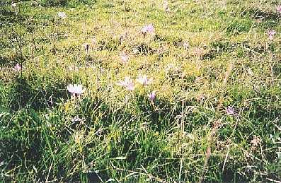 Compte tenu de la diversité des milieux traversés et de la diversité de la flore, le sentier du Tacot permettera au botanistes amateurs ou avertis, d'herboriser à l'envie, en passant des prairies aux sous bois, des crocus aux scilles, aux scolopendres ou aux jonquilles...